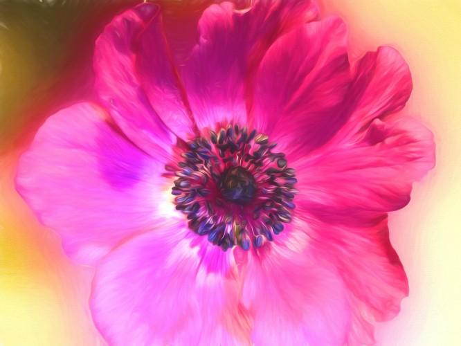 FlowerAnemonePainting