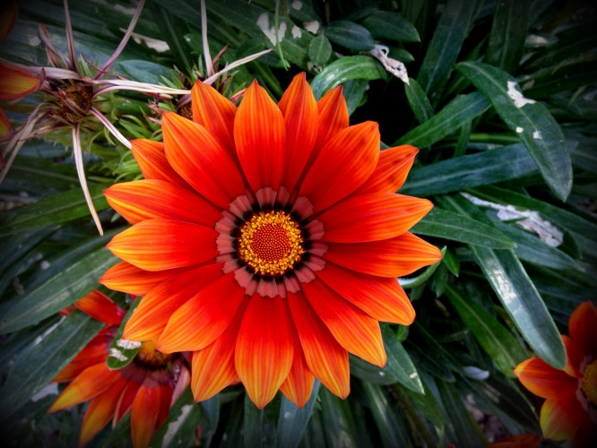 Water-Saving Flowers for Your Garden