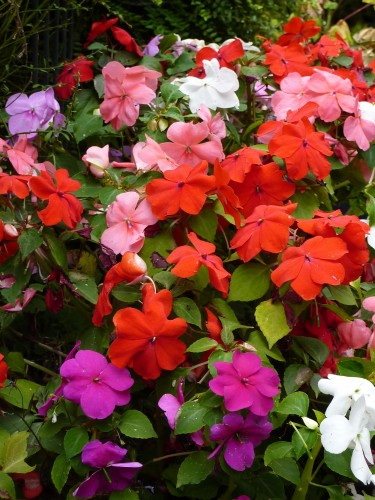 Flowers for Hanging Baskets