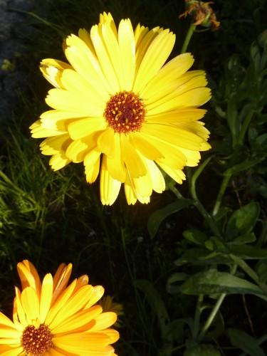 Flowers for Eczema Relief