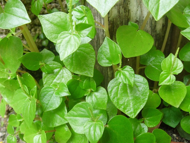 The Miraculous Shiny Bush Plant